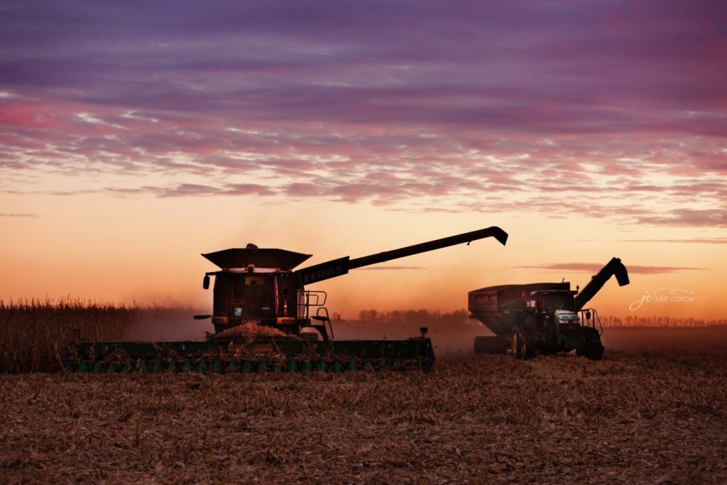 Combines during harvest in southwestern Minnesota